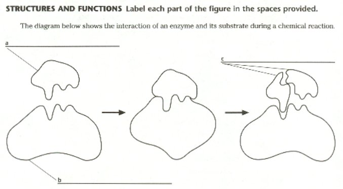 form follows function biology essay question