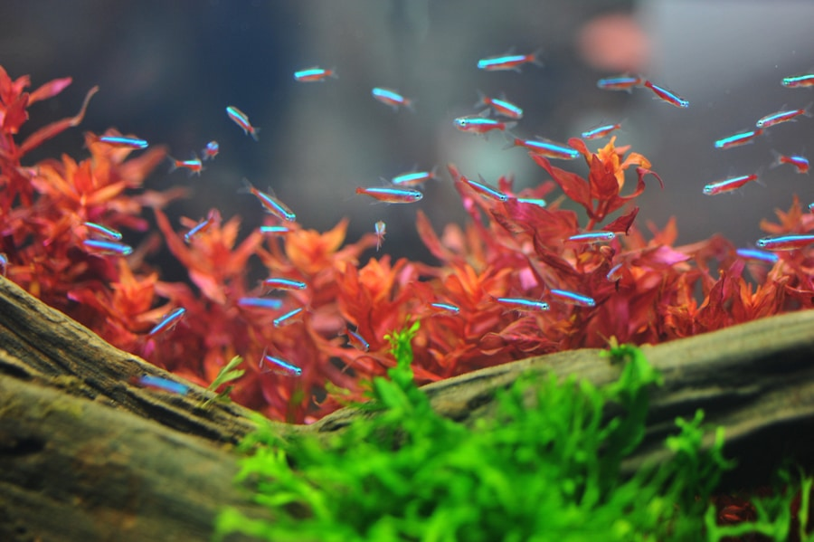 Tips and Advice on Growing Plants in Aquariums – What You Need to Know