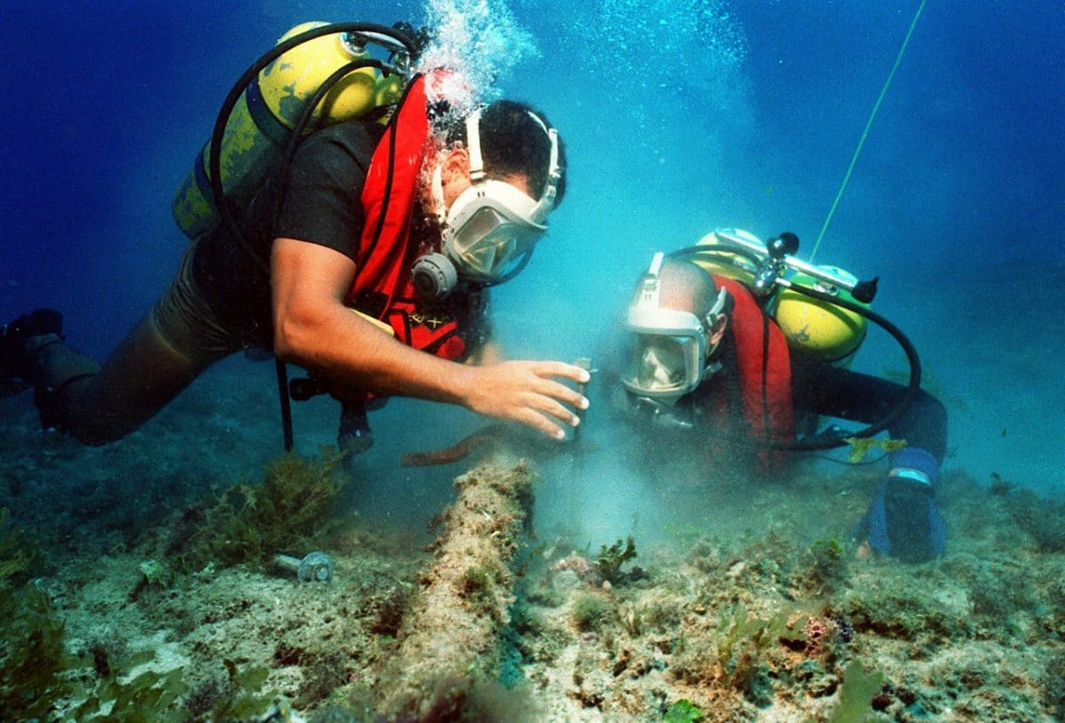 How To Become A Marine Biologist: Your Path To A Career Among The Waves